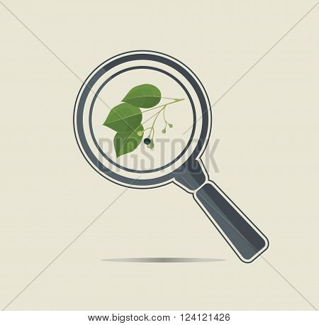 Camphor under a magnifiyng glass. Botanical research conceptual icon.