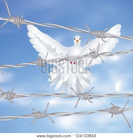Dove And Barbed Wire