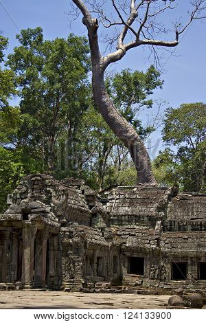 Part of the ancient Khmer ruins of Ta Prohm near Siem Reap in Cambodia