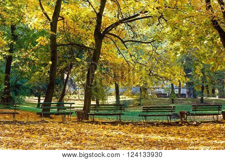 Autumn city park with  yellow leaves under trees and benches.