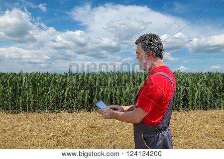 Farmer or agronomist examine corn plant  field using tablet