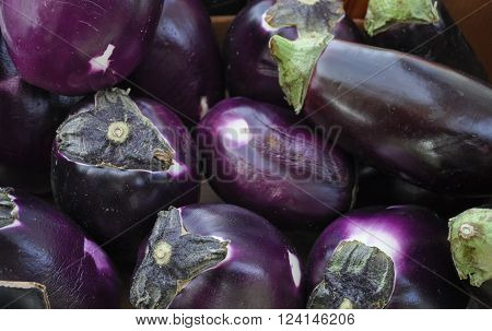 Many Aubergine Vegetables