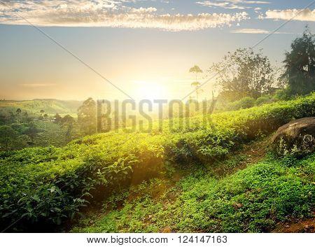 Sun over tea plantation in Nuwara Eliya, Sri Lanka