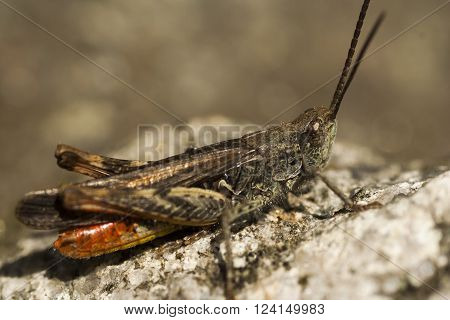 a grass hopper sitting on a rock