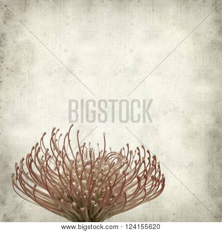 textured old paper background with protea flower