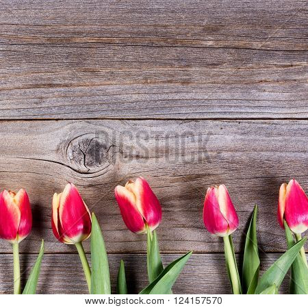 Tulips on wooden board lower part of frame for Mothers Day