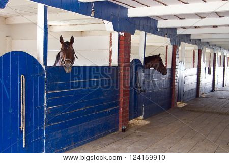 Horses stand in cages inside the stables