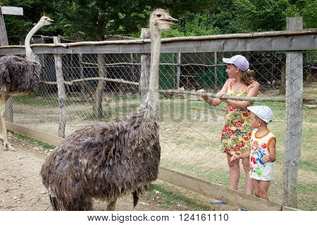 Lazarevskoe, Russia - august 08, 2012, Children standing at the aviary with ostriches, Lazarevskoe