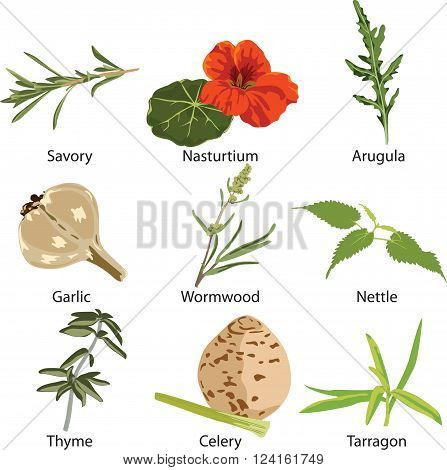 set of different spices on white background