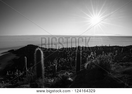 The sun star at the horizon over the majestic Uyuni Salt Flat among the most important travel destination in Bolivia. Wide angle shot in backlight from the Incahuasi Island with glowing rocks and cactus. Black and white converted.