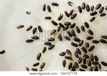 Sprouted seeds. The concept of ecology, the concept of growth, the concept of development, concept of new life.