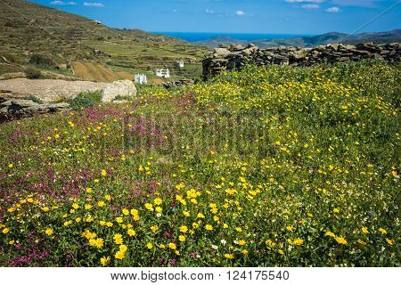 Beautiful Landscape With Fields, Mountains And Flowers