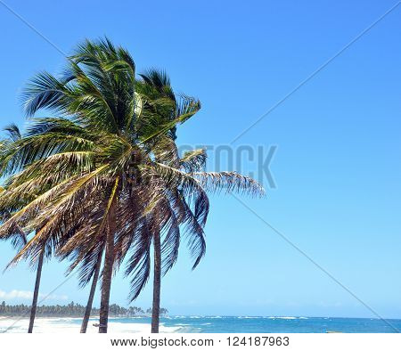 Palm trees in the wind from the ocean on a background of blue cloudless sky , on the horizon line ocean views