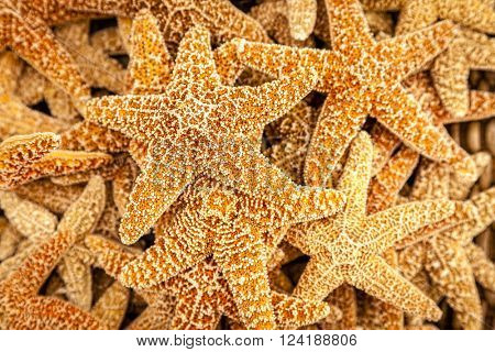 Starfish on sale as souvenirs