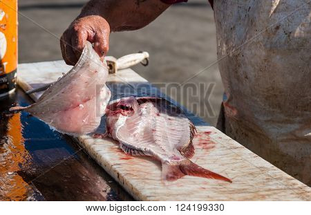 One fillet of freshly catch snapper fish of New Zealand.