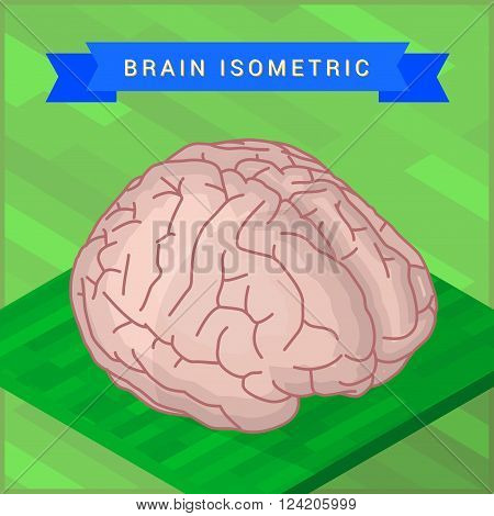 Lateral of human brain flat isometic illustration. Human brain flat isometric pictogram.