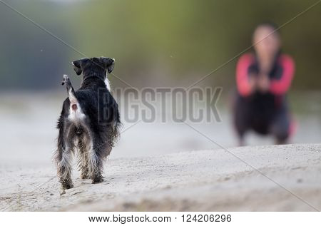 Girl With Dog Walking On The Beach