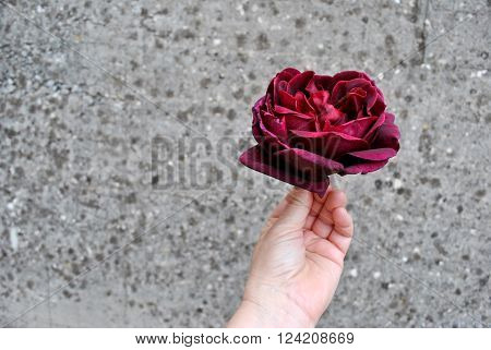 Burgundy Rose in a Hand on the Gray Spotted Background