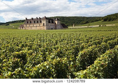 Burgundy, France - September 10, 2013: Landscape view of a typical sunlit vineyard in Burgundy, France with Chateau Clos Du Vougeot in the background.