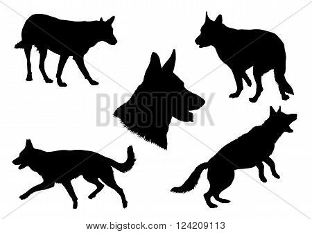 Black silhouettes of an German Shepherd dog in various poses on a white background