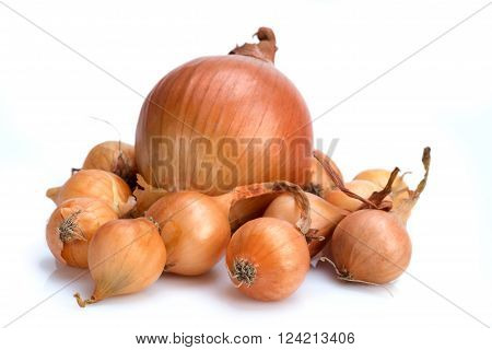 Onion. A bulb large and bulbils - seedling