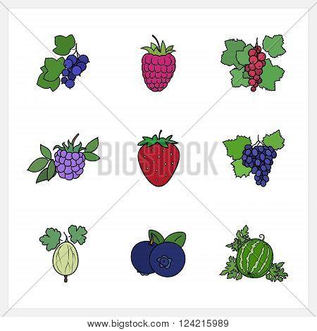Berry, Flat Design , Isolated on White Background , Set of Fruit Icons , Vector Illustration