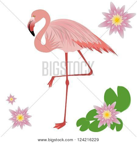 Vector Illustration of a Flamingo. Flamingo isolated on white background. Vector illustration pink flamingo. Exotic bird.