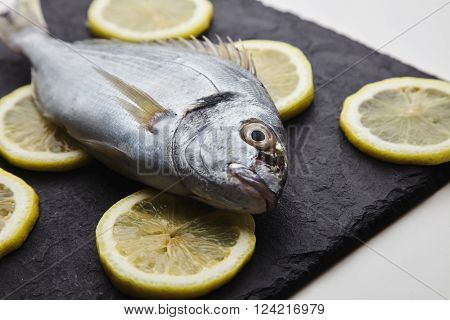 Presentation Of Fresh Sea Bream Isolated On Rounded Lemon Clices On Black Stone Pads On White Tables