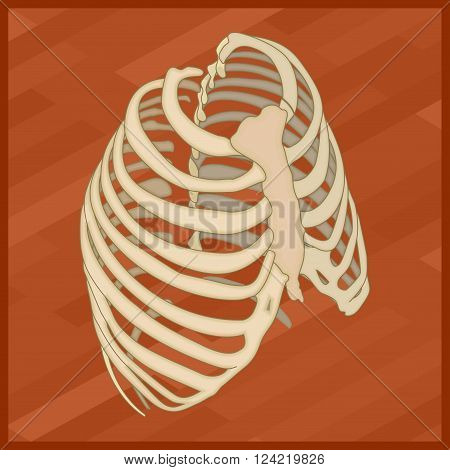 Human thorax flat isometric icon. Protextora bone rib cage or internal organs of thorax isometric flat illustration.