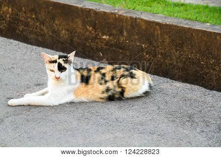 cat  or kitty sit on cement ground