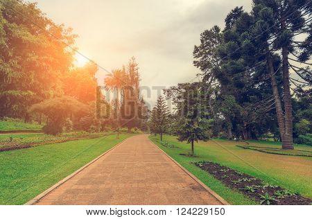 Nuwara Eliya, Sri Lanka. Queen Victoria Park, the sun illuminates the park road