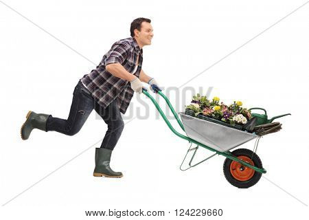 Young joyful gardener pushing a wheelbarrow full of flowers and running isolated on white background