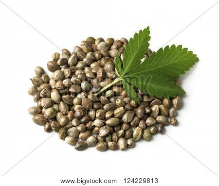 Hemp seeds with a green leaf on a white background