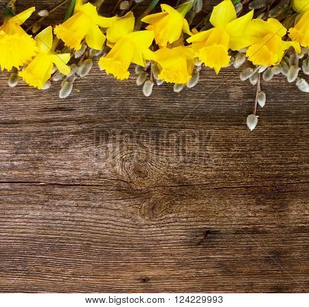 spring fresh  yellow daffodil flowers with catkins border on wooden background with copy space