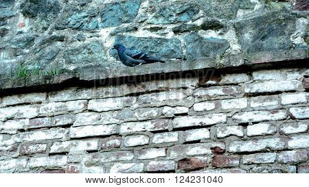 Pigeon sitting on a stone ledger watching