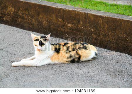 cat , kitty , cute cat , cute kitty
