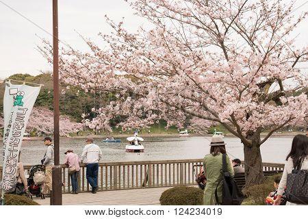 KOBE JAPAN APRIL 3 Cherry blossom celebration called hanami. Akashi Park on April 3 2016 in Kobe Japan.