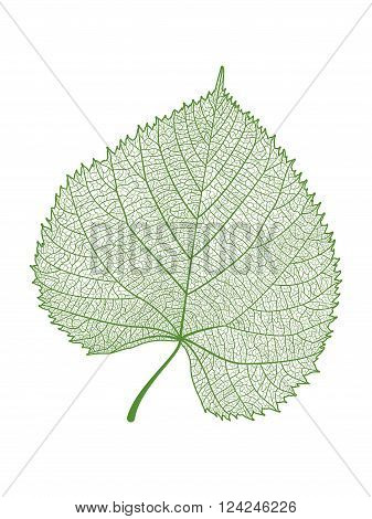 Leaf isolated. Vector illustration .  EPS 10