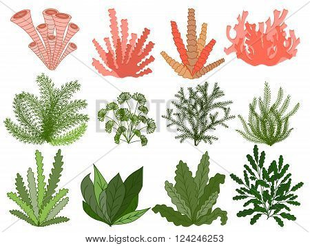 Collection of marine plants, leaves and seaweed ,coral. set hand drawn marine flora. Isolated vector illustration in line art style.Design for summer beach, decorations.Vector. EPS 10
