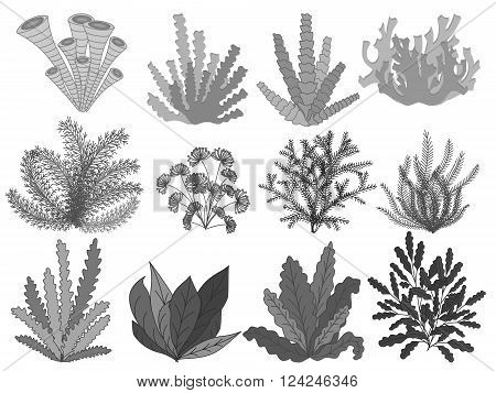 Collection of marine plants, leaves and seaweed ,coral. Vintage set of black and white hand drawn marine flora. Isolated vector illustration in line art style.Design for summer beach, decorations.