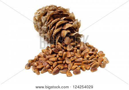 cedar cone and seeds on white background