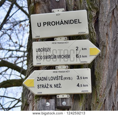 tourist signposting on the bark of a tree. Czech Republic