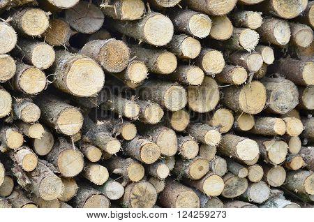 chopped wood border. South Bohemia Czech Republic