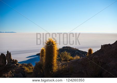 Wide angle view of the Uyuni Salt Flat, among the most important travel destination in Bolivia. Shot taken at sunrise from the summit of the Incahuasi Island with glowing cactus.