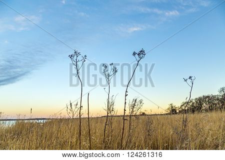 backwater landscape with reed grass in Zempin, Usedom