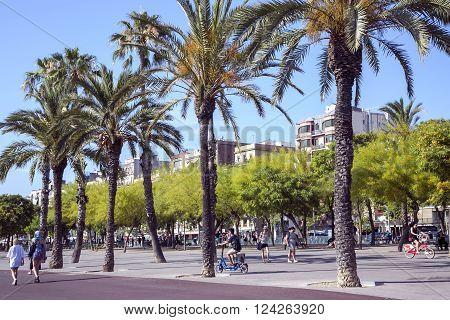 SPAIN, BARCELONA, JUNE, 28, 2015 - People walking at the promenade planted with flowering trees Ratama or Parkinsonia aculeata by port in Barcelona, Spain