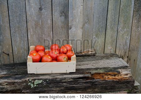Fresh eco red tomatoes in wooden box in the garden