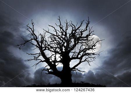 silhouette of spooky bare oak tree on dark sky with full moon