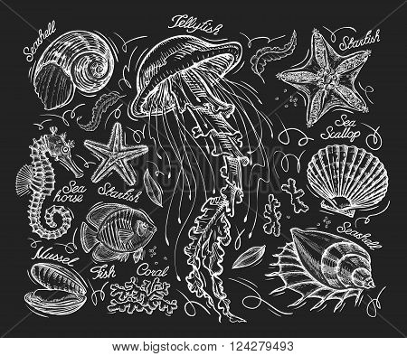 marine mammals a sketch drawn by hand on a black background. vector illustration