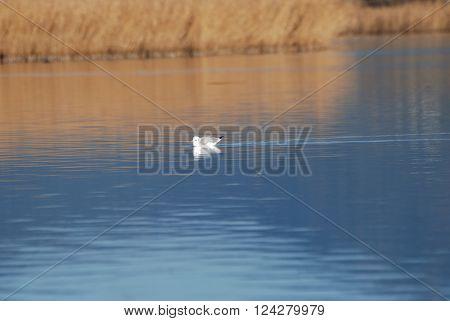 Isola della Sardegna Mar mediterraneo fauna di fiume